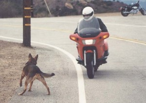 Honda Pacific Coast 800 vs. dog