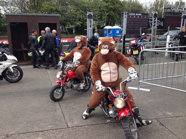 Two oversized chimps horsing around on monkey bikes.