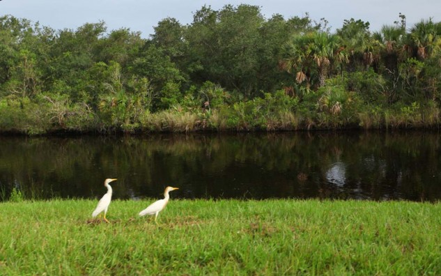 The Kennedy Space Center is located inside the 140,000 acre Merritt Island Wildlife Refuge. The roads leading into the Center are lined with canals filled with wildlife.