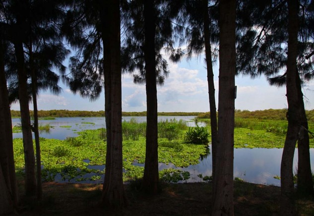The St. Johns River is the longest in Florida, measuring at over 300 miles.