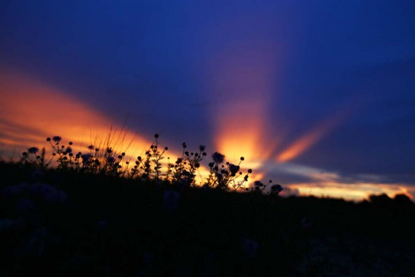 Photo by Holly MarcusA central Florida sunset.