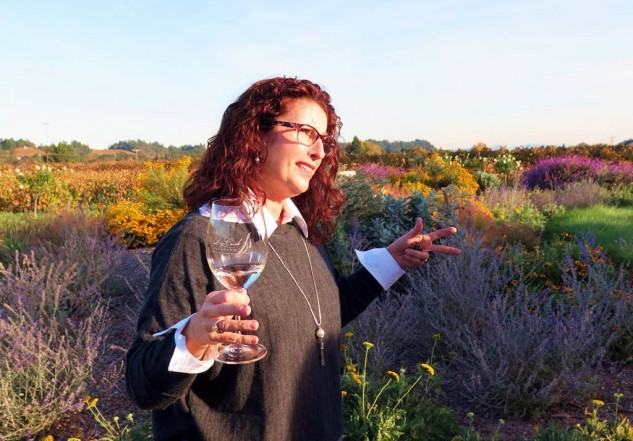 Dry Creek Winery's Kim Wallace amongst the insectivory they just planted, with all sorts of lavenders and other native plants that attract the bugs and hummingbirds that help the grapes grow. I'm going to see if they need an on-site motojournalist when I collect my wits.