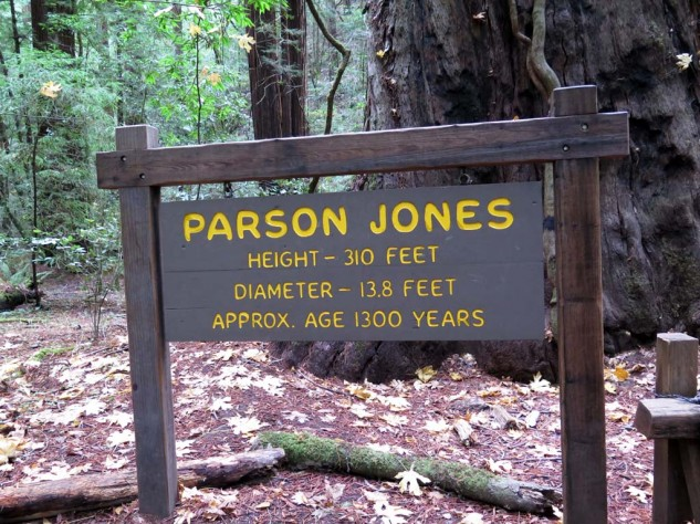 Parson Jones is the biggest tree in the reserve. Tour Leader LeAn asks, how old's the sign?