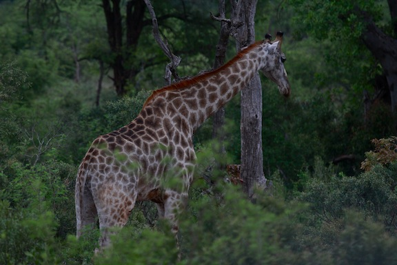 010614-bayly-south-africa-IMG_7774