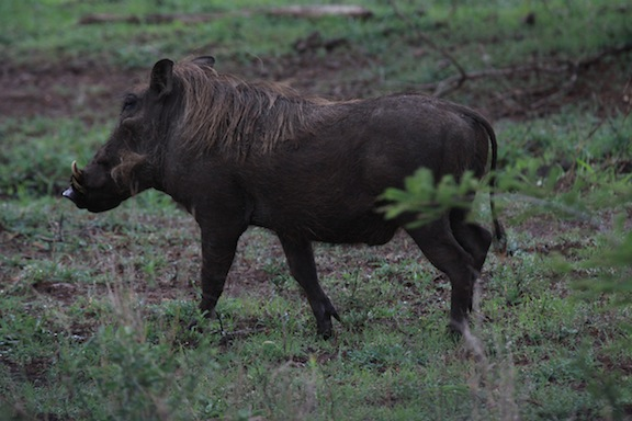 010614-bayly-south-africa-IMG_7961