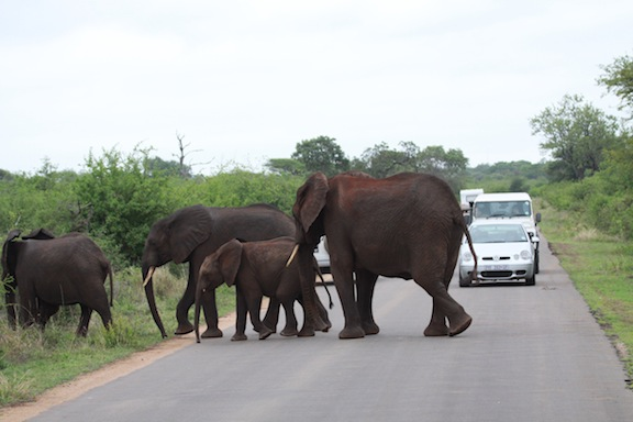 010614-bayly-south-africa-IMG_8171