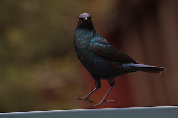 010614-bayly-south-africa-IMG_8282