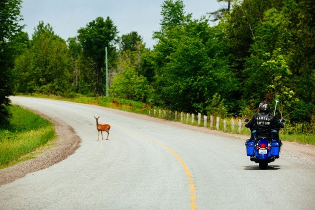 Ontario Highlands Deer Crossing