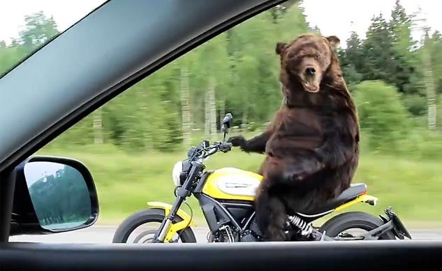 081515-weekend-awesome-bear-ducati-scrambler-f