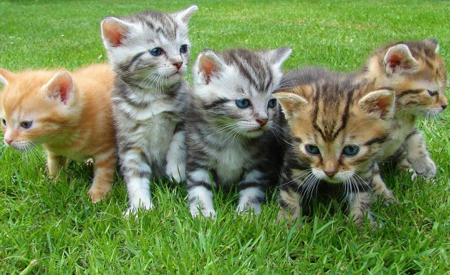 "Just in case you did an image search for ""degloving,"" I've posted this photo of kittens as a mental cleanser."