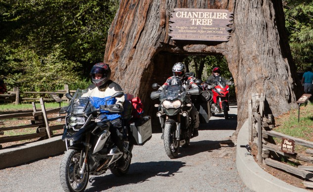If a bike's ability to navigate a hollow tree is important to you, let us know.