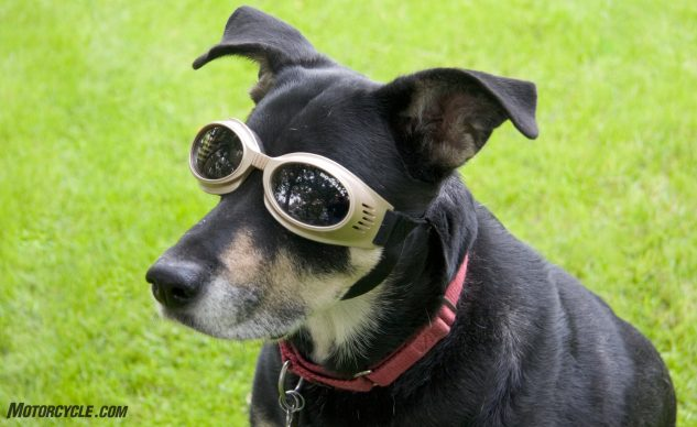 081017-top-10-reasons-to-wear-motorcycle-gear-02-goggles-on-dog
