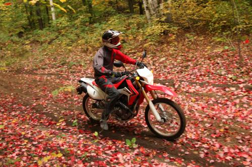 Honda CRF250L in Ganaraska Forest