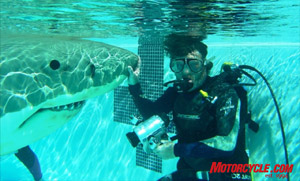 Eddie scuba dives with live sharks and creates mechanical Great Whites for movies.