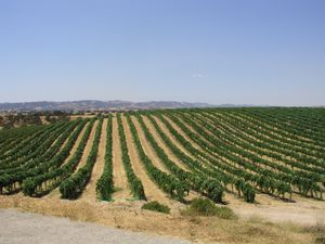 A winery tour is one of the finest things in life - doing it in California is much more sweet.