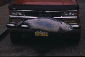 Personalized license plates in Alaska come with fins.