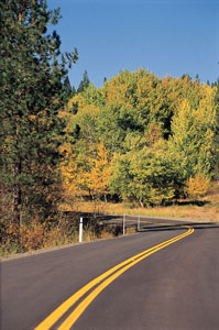 Tree-lined road near Merritt. (Photo courtesy Tourism British Columbia)