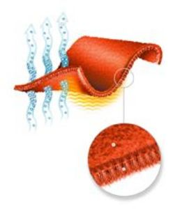 This is either an illustration of the moisture-wicking properties of Polartec Thermal Pro fabric or the fruit roll up I had with lunch. Illustration from the Polartec website.