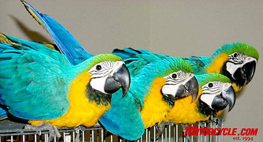 Yep, we can see the correlation between these Macaws and major rally attendees.